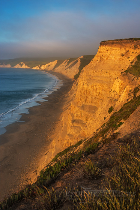 Image: Sunrise light on the coastal cliffs above Drakes Beach, Drakes Bay, Point Reyes National Seashore, California