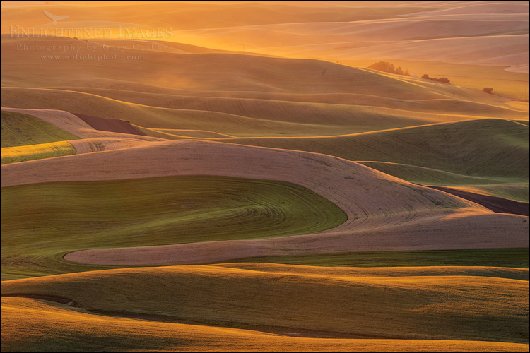 Image: Rolling hills of the Palouse region at sunset, Washington State