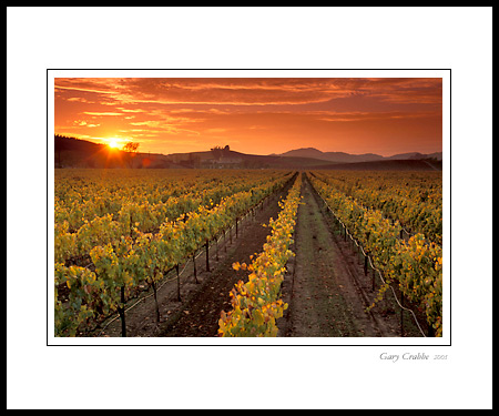 Photo: Golden sunset over vineyard in the Carneros Region, Napa ...