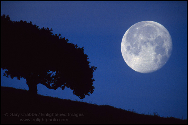 Picture Moon Next To Oak Tree Alhambra Valley