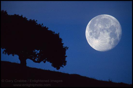 Moonoak Hill