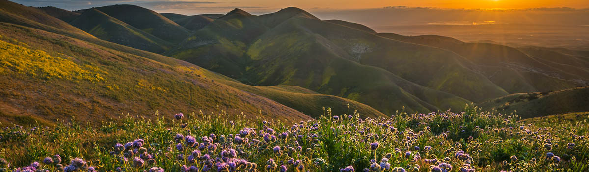 The Photographic Chase isn't always for the obvious subject – Carrizo Plain Wildflowers
