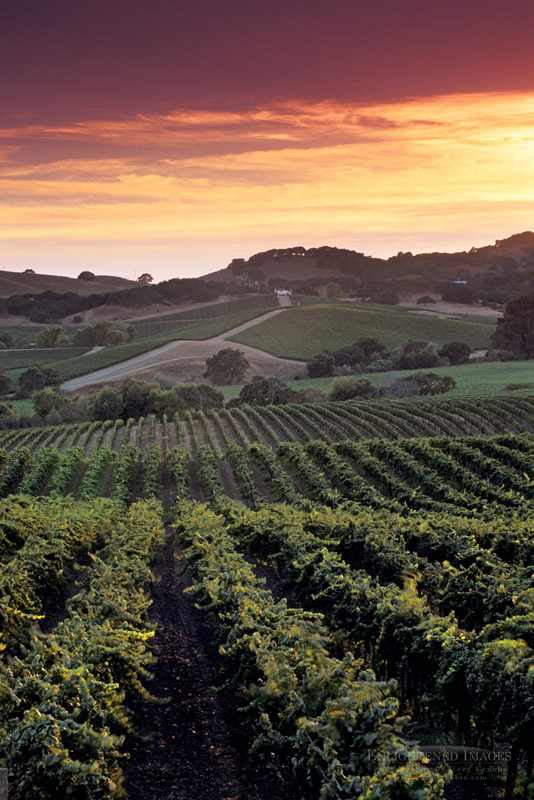 california vineyard photos - wine country pictures and scenic prints - gary crabbe