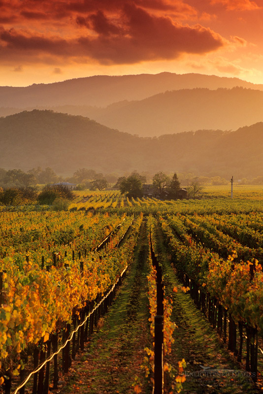 California Vineyard Photos Wine Country Pictures And