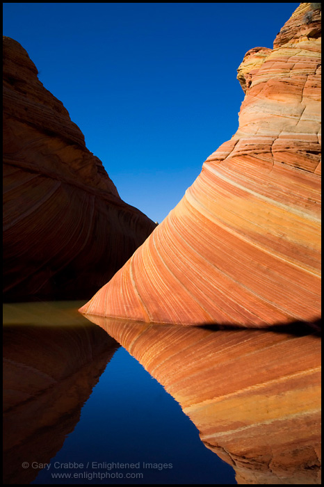 Image: Striated sandstone reflected in seasonal pool of water at The Wave, Coyote Buttes, Paria Canyon Vermilion Cliffs Wilderness, Arizona