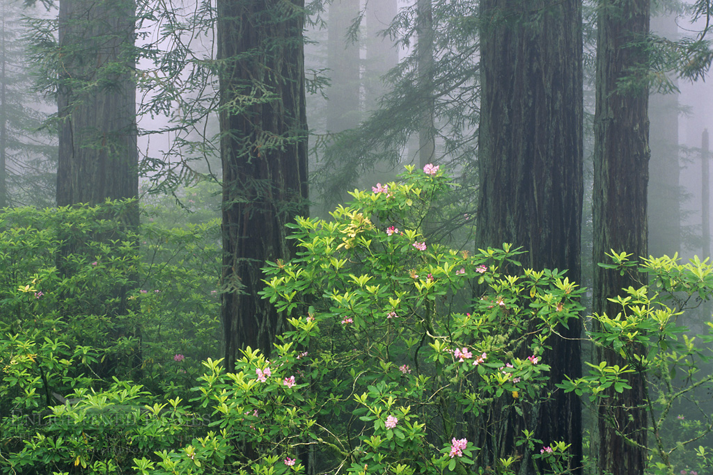 Travel Photography Blog: Redwood National Park, California